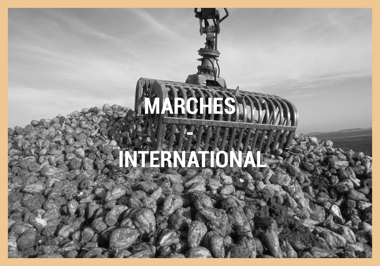 MARCHES – INTERNATIONAL